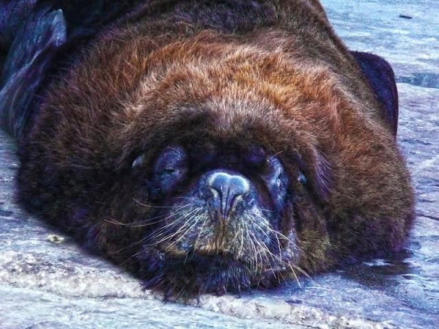 Foto de lob marino