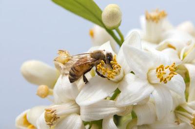 Fiori più efficaci dei pesticidi nei campi