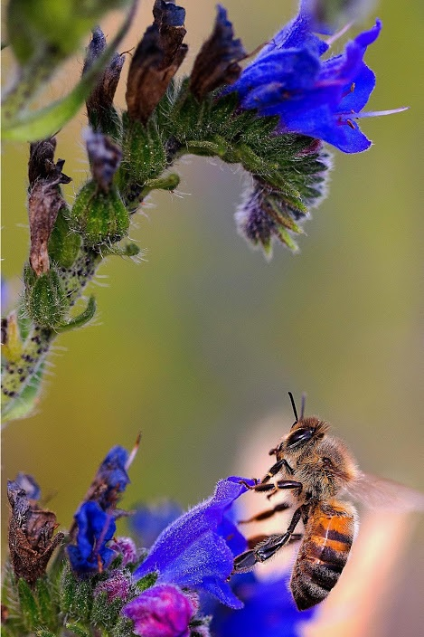 ABEJAS TRABAJANDO - BEES WORKING.