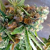 Someone Figured out How to Train Bees to Make Honey from Cannabis