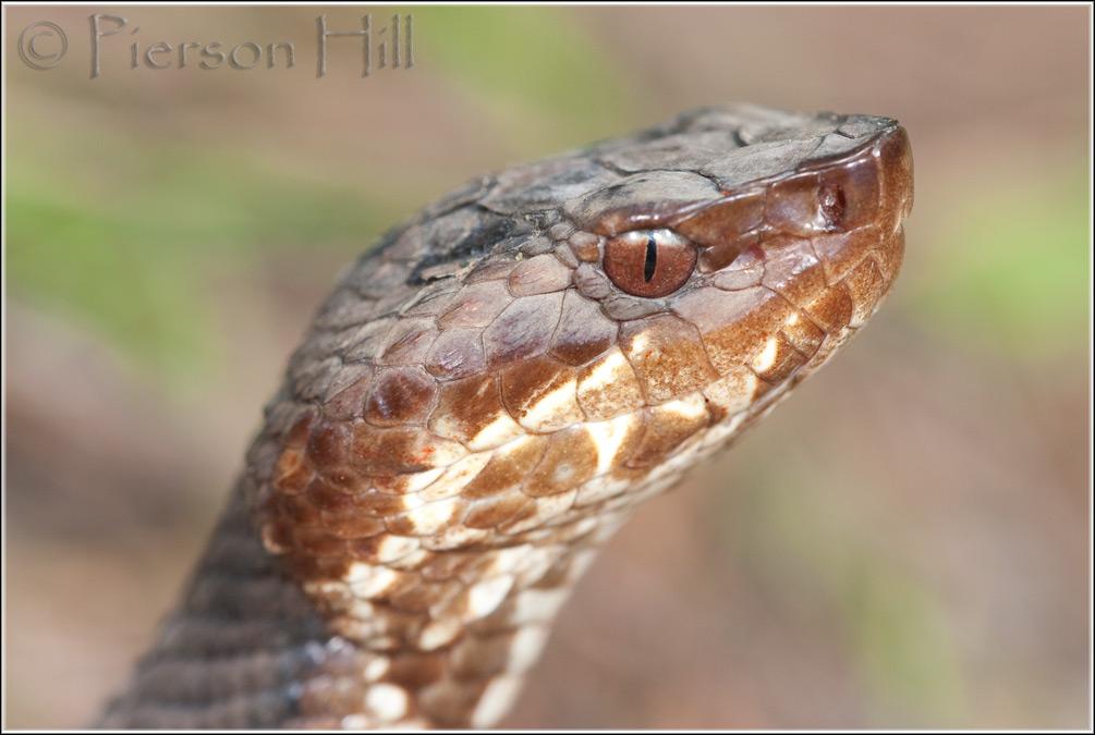 Snake Without Eyes
