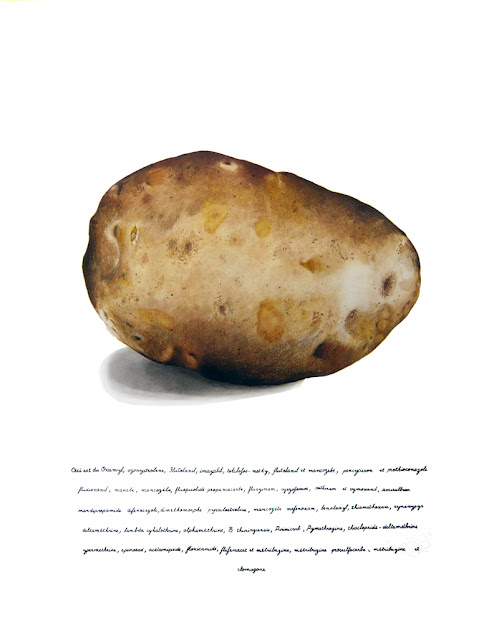 """Le dessinaux crayons de couleurs. d'une pomme de terre sur papier blanc . En dessous une liste de produits phytosanitaires commençant par """"Ceci est""""."""