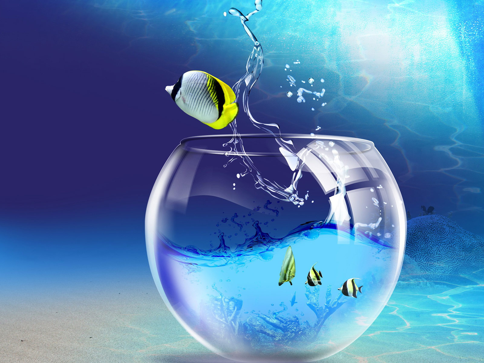 Fish Wallpapers,Fish Pictures,Fish Photos: Fish wallpapers