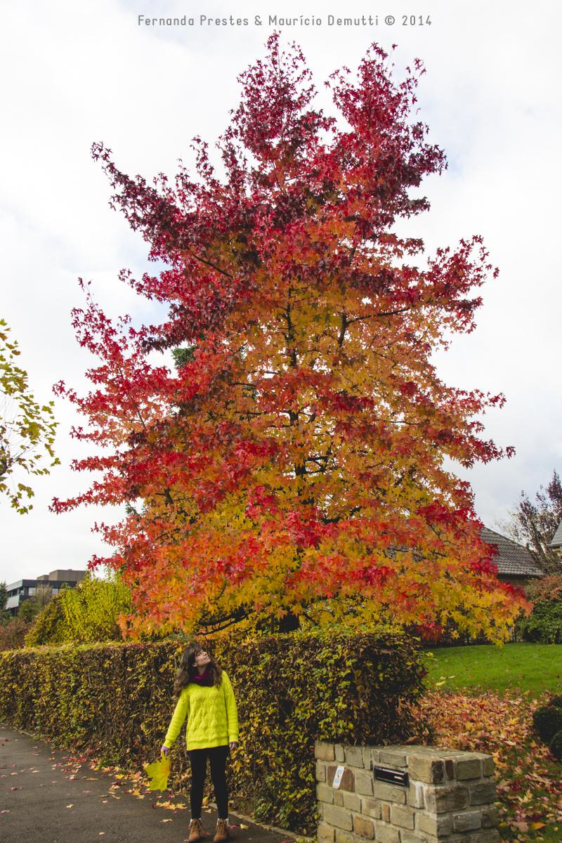 árvore colorida outono