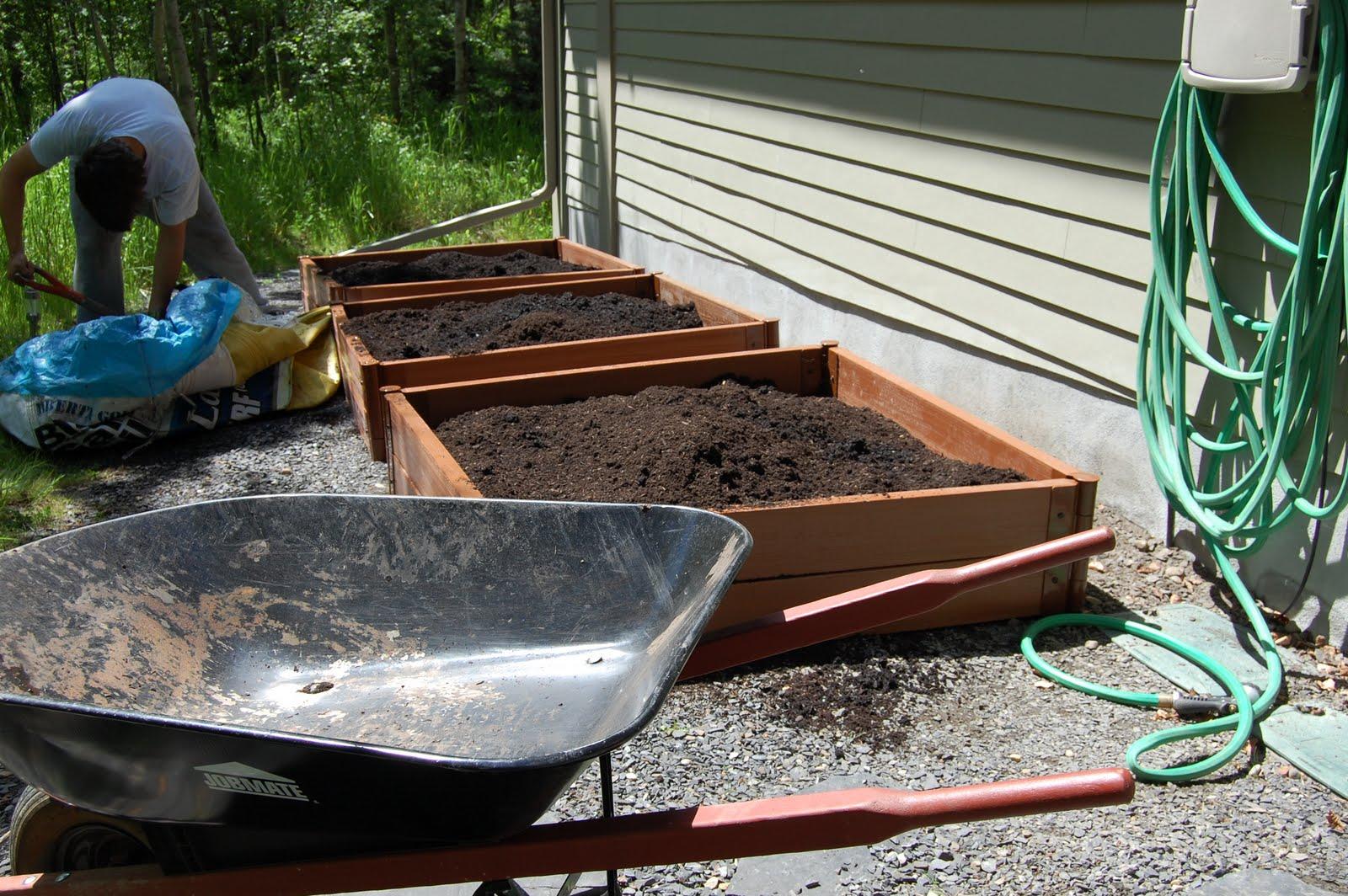 Kid Calgary My Vegetable Garden Planting The Seeds