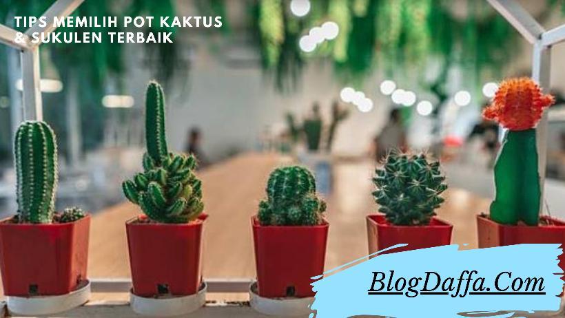 Tips Memilih Pot untuk Kaktus