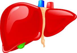 Cara Mengobati Infeksi pada Organ Hati