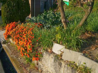 山田池公園周辺で出会った花たち