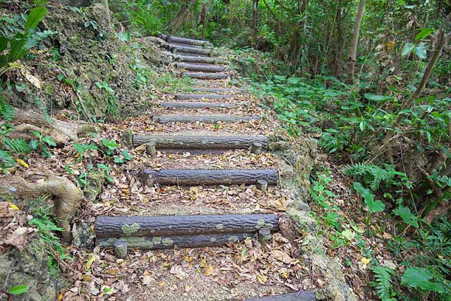forest, trail, hill, steps, logs, Okinawa