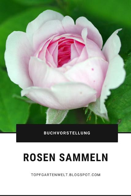 {Buchwerbung} Rosen sammeln - alte Sorten finden und selbst vermehren #rosen #rosenbuch #rosensammeln #rosenvermehren #rosenimwasserglas #rosenzucht #buchtipprosen #buchrezensionrosen #gartenbuch - Gartenblog Topfgartenwelt