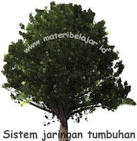 Sistem Jaringan Tumbuhan Dan Fungsinya