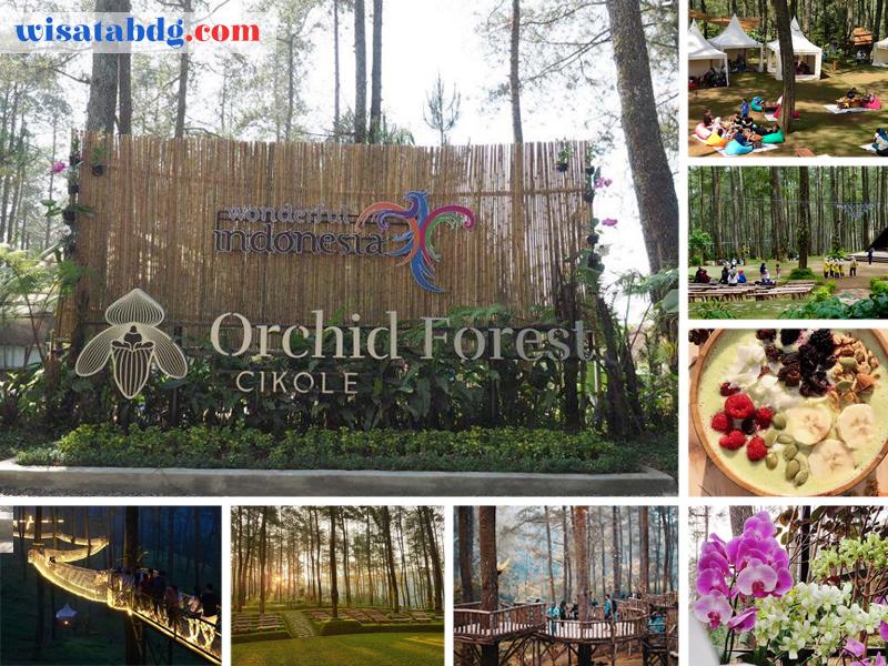 Orchid Forest Cikole Destinasi Wisata Favorit Kekinian Di