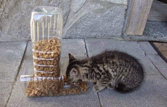 Idea para reciclar pet y alimentar a tu gato -despachador de comida