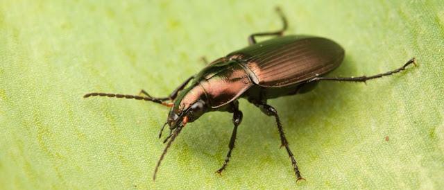 Insectos y biologia