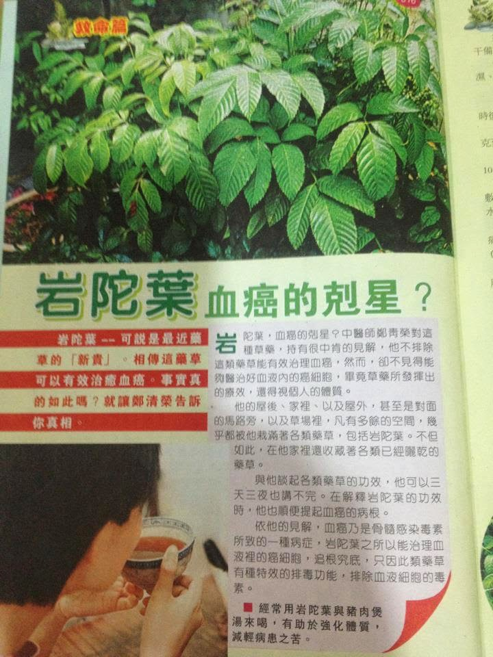 The Miracle of Sabah Snake Grass (Clinacanthus Nutans) 优遁草: Our