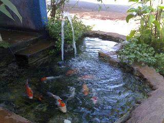 Cara Membuat Filter Kolam Ikan Koi