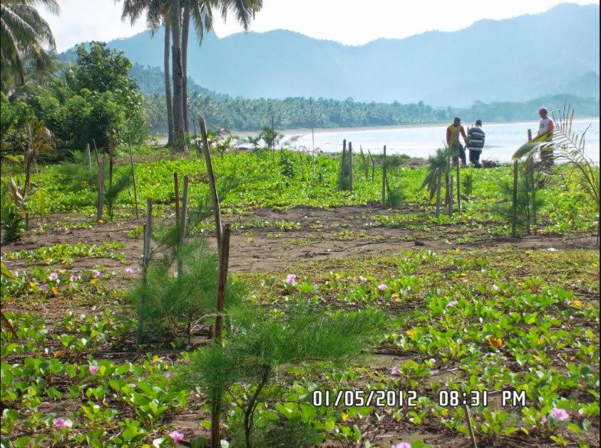 Hutan Mangrove Pancer Cengkrong Gallery