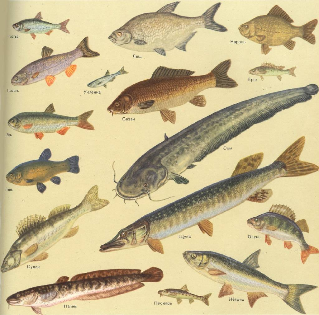 картинки с видами рыб