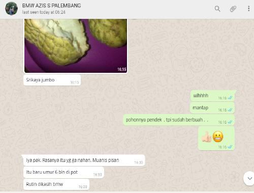 Penuturan pak Aziz lewat komunikasi chat dengan tim kami. Selain cepat berbuah dan buahnya lebat, efek pemberian POC BMW juga membuat rasa buah srikaya menjadi lebih maniiiss…