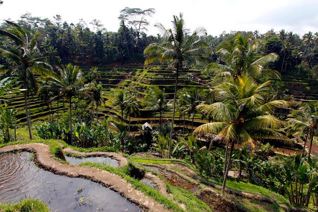 Las terrazas de Tegalalan