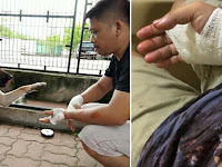 Usai Gigit Majikan, Anjing Ini Mendadak Murung, Saat Ingin Dibunuh, Fakta Menyakitkan Terungkap!