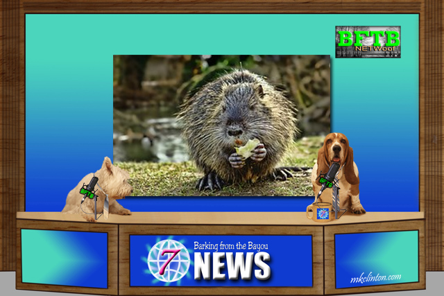 BFTB NETWoof News set with two dog anchoring and porcupine storyboard