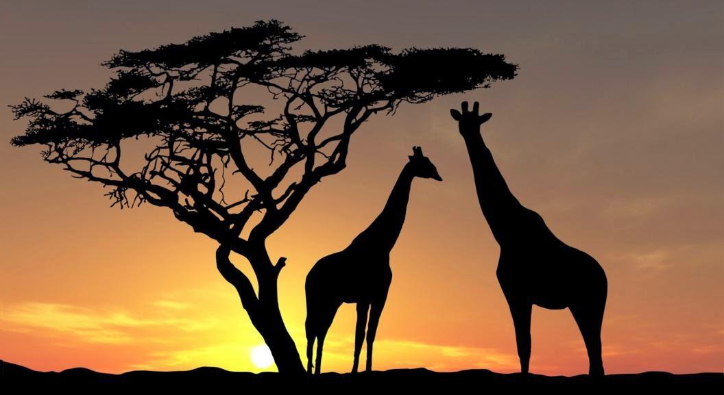 Amanecer con jirafas