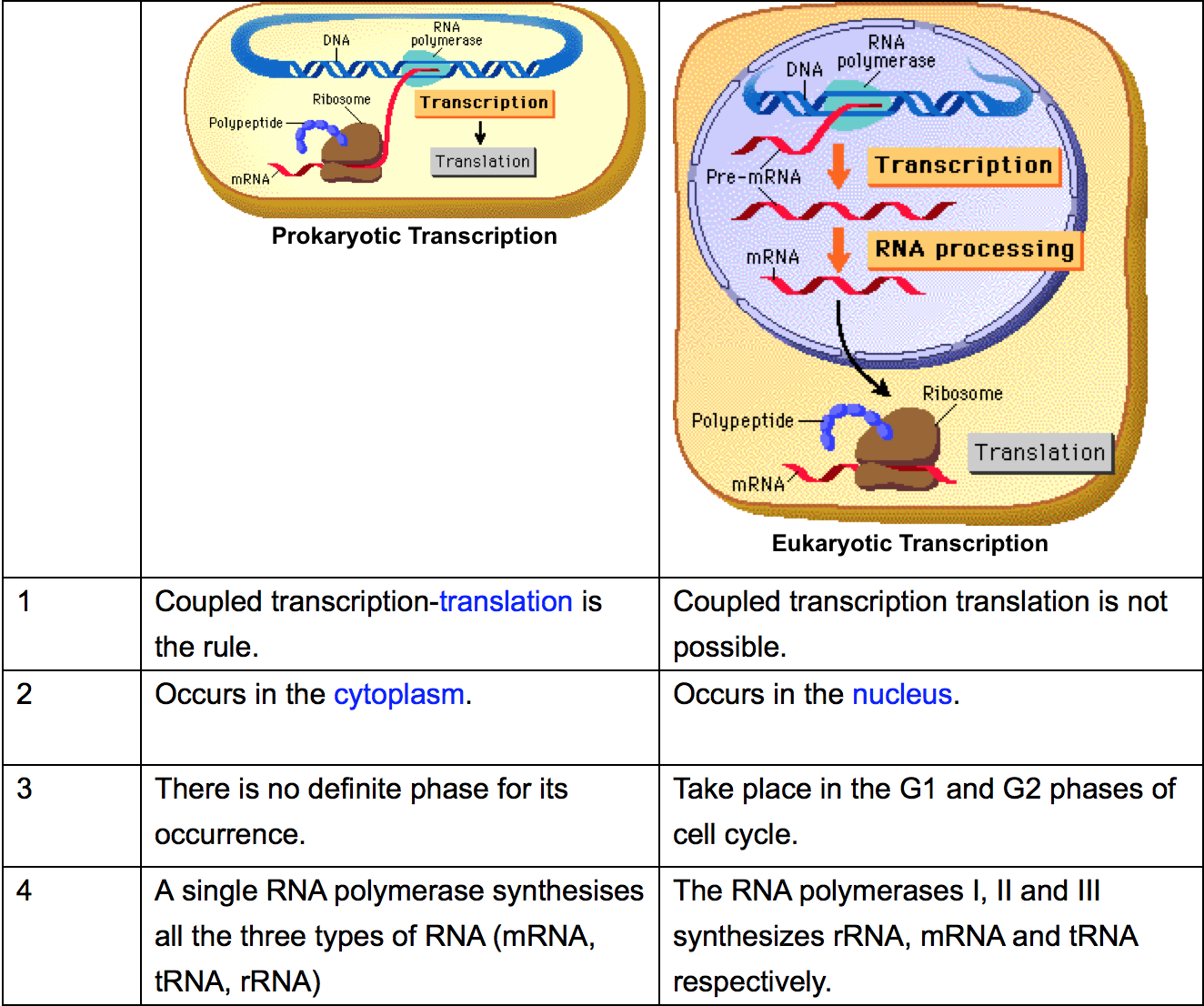 Biology Review Transcription In Eukaryotes And Prokaryotes