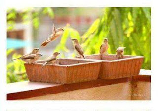 bird water feeder