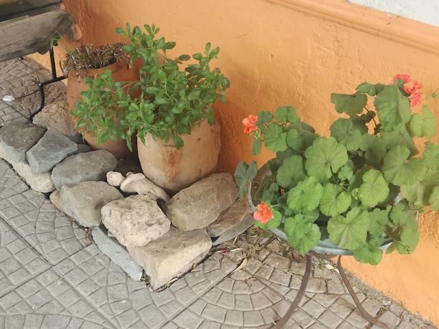 ogród sycylijski