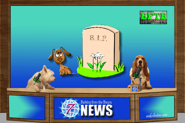 BFTB NETWoof News report of dog following funeral procession