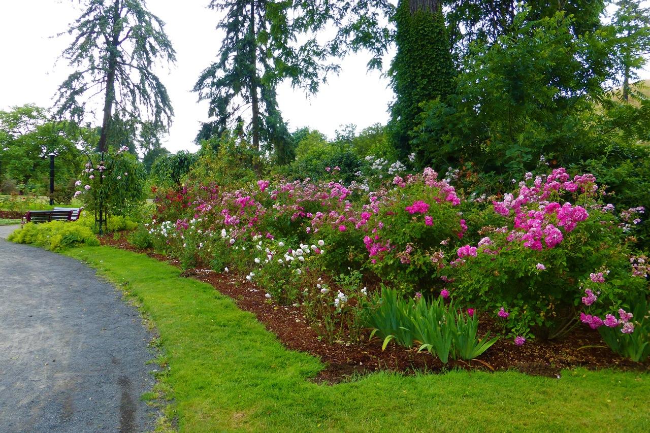 Owen Rose Garden, roses, rose garden