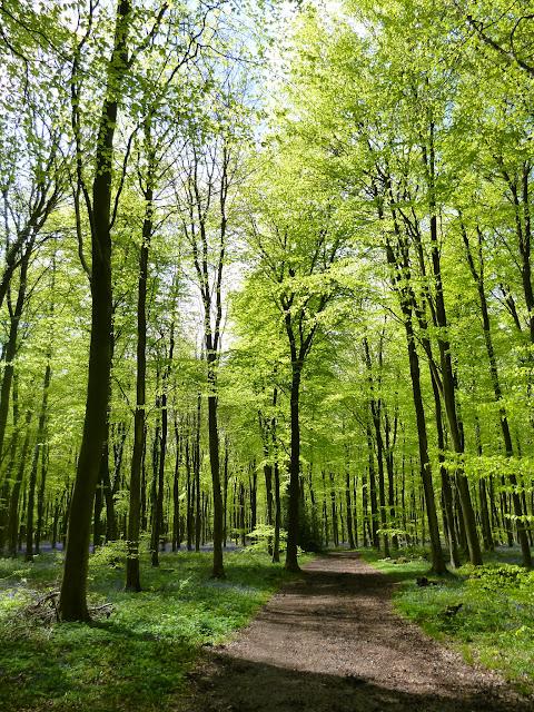 walk in spring woodland