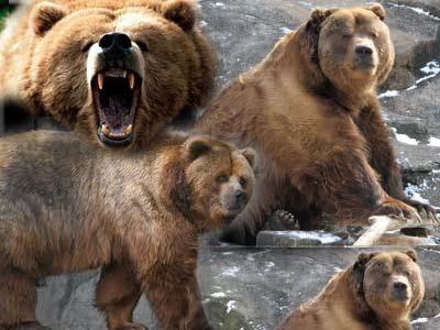 Inilah Kebahagiaan Beruang Coklat yang Bebas Setelah 17 Tahun Dikurung dalam Kandang yang Sempit