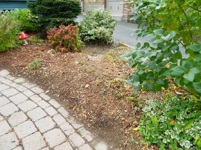Paul Jung Gardening Services Toronto Fall Cleanup Front Yard in Lawrence and Yonge After