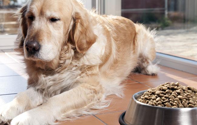 Karma Eukanuba dla starszego psa