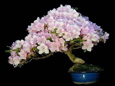 light-pink-color-flowers-plants