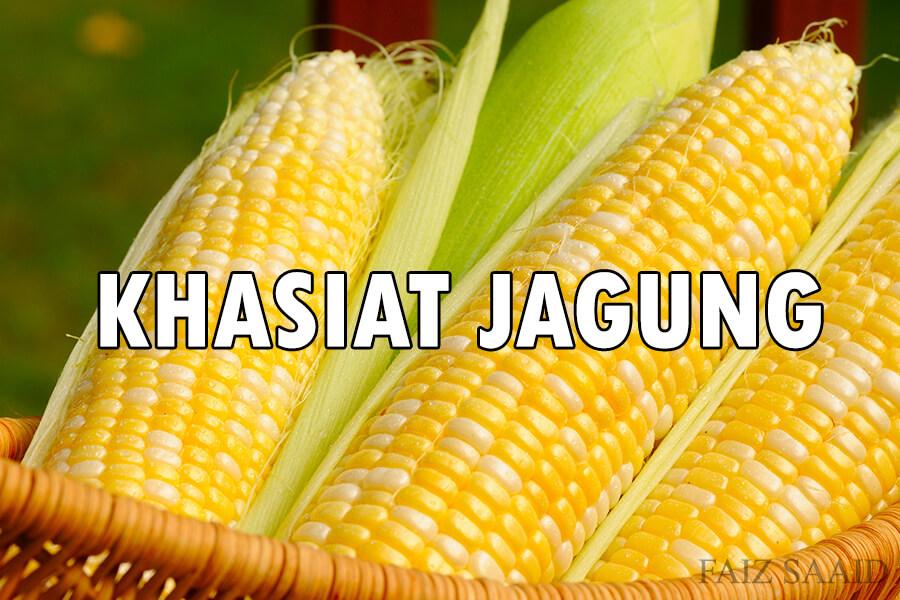 makan jagung