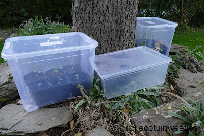 Transparante opbergbox als miniserre of minikas