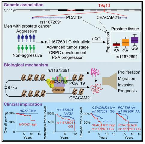 Cancer de prostata biologia molecular - parohiamogosani.ro