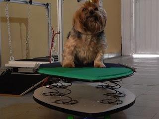 exercícios cães pequenos