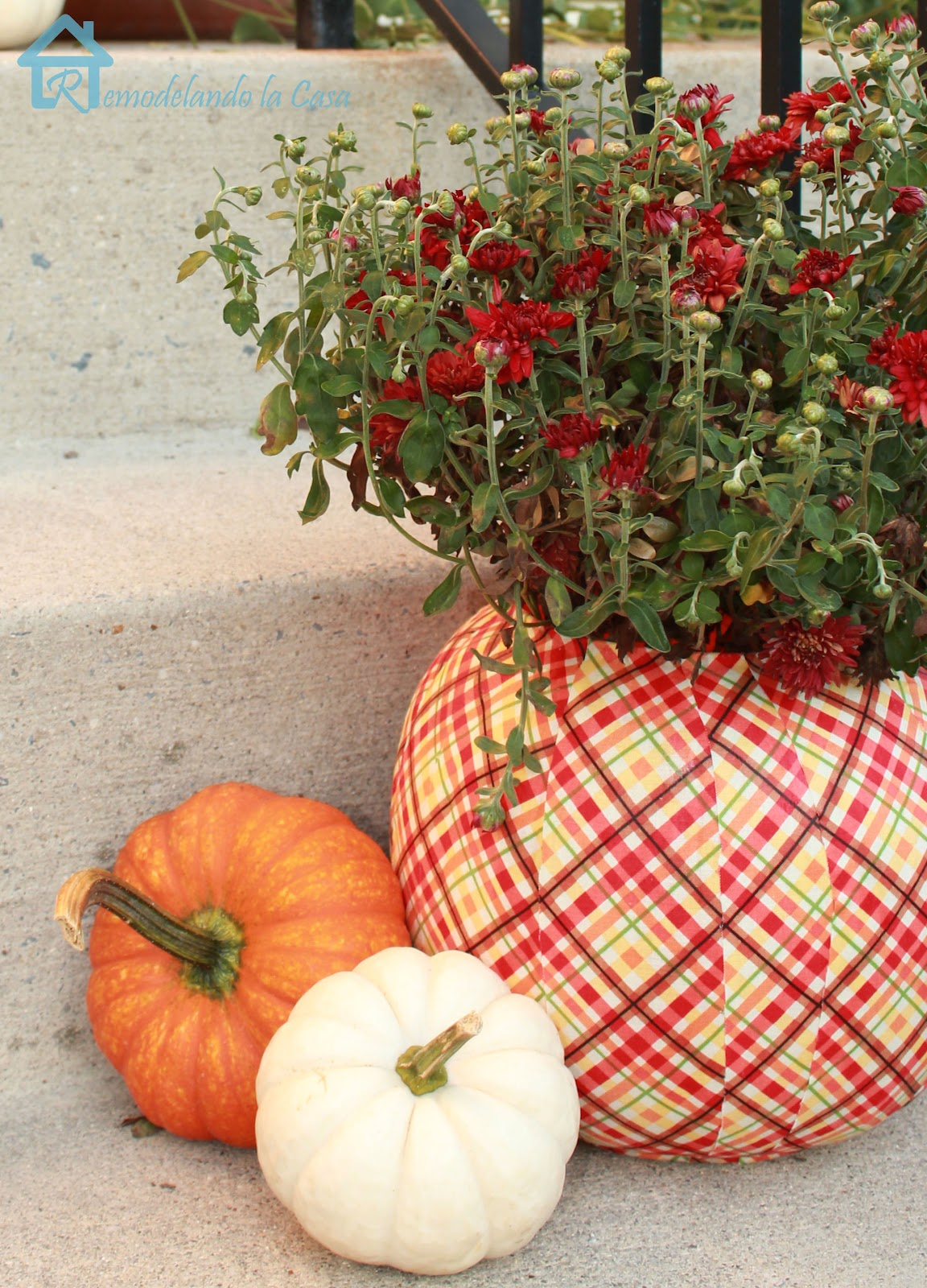 orange and white little pumpkins with plastic decoupage fabric pumpkin - red mum plant
