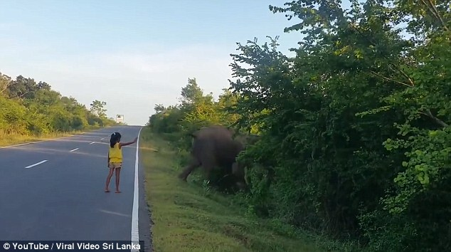 Girl stops elephant