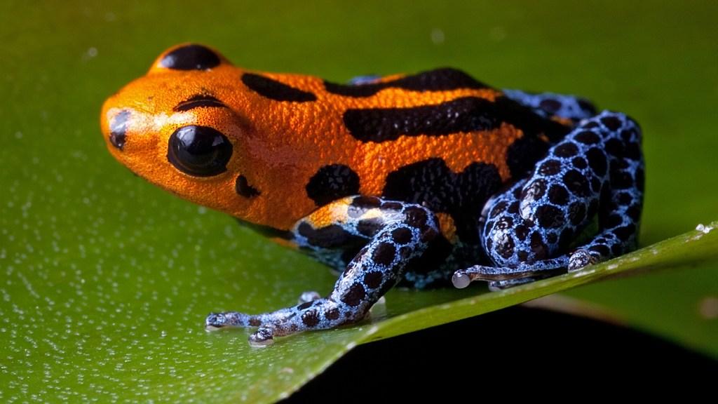 दुनिया के 10 सबसे जहरीले जानवर इनमे सांप नहीं है -The world's 10 most poisonous snakes have these animals -