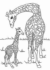 Baby Giraffe Coloring Pages At Zoo