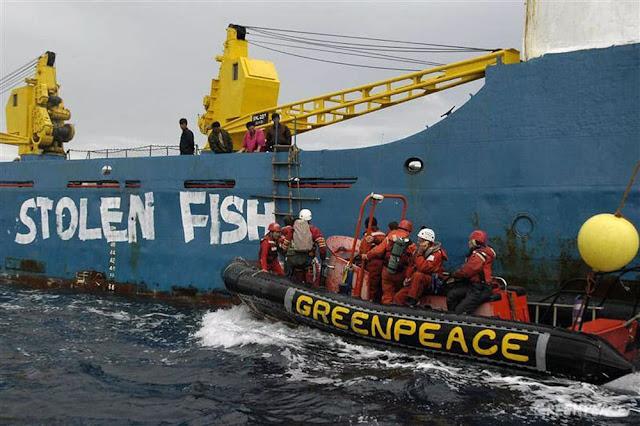 Greenpeace Desak Perlindungan Tuna yang Lebih Kuat di WCPFC Manila