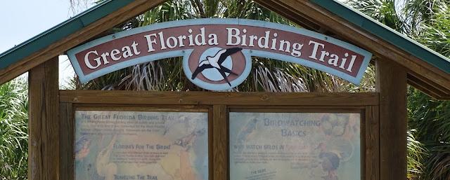 Vogelbeobachtungen Fort de Soto Park, Florida USA