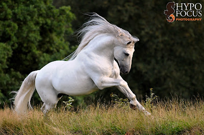© Hypo Focus Paardenfotografie - www.hypofocus.com