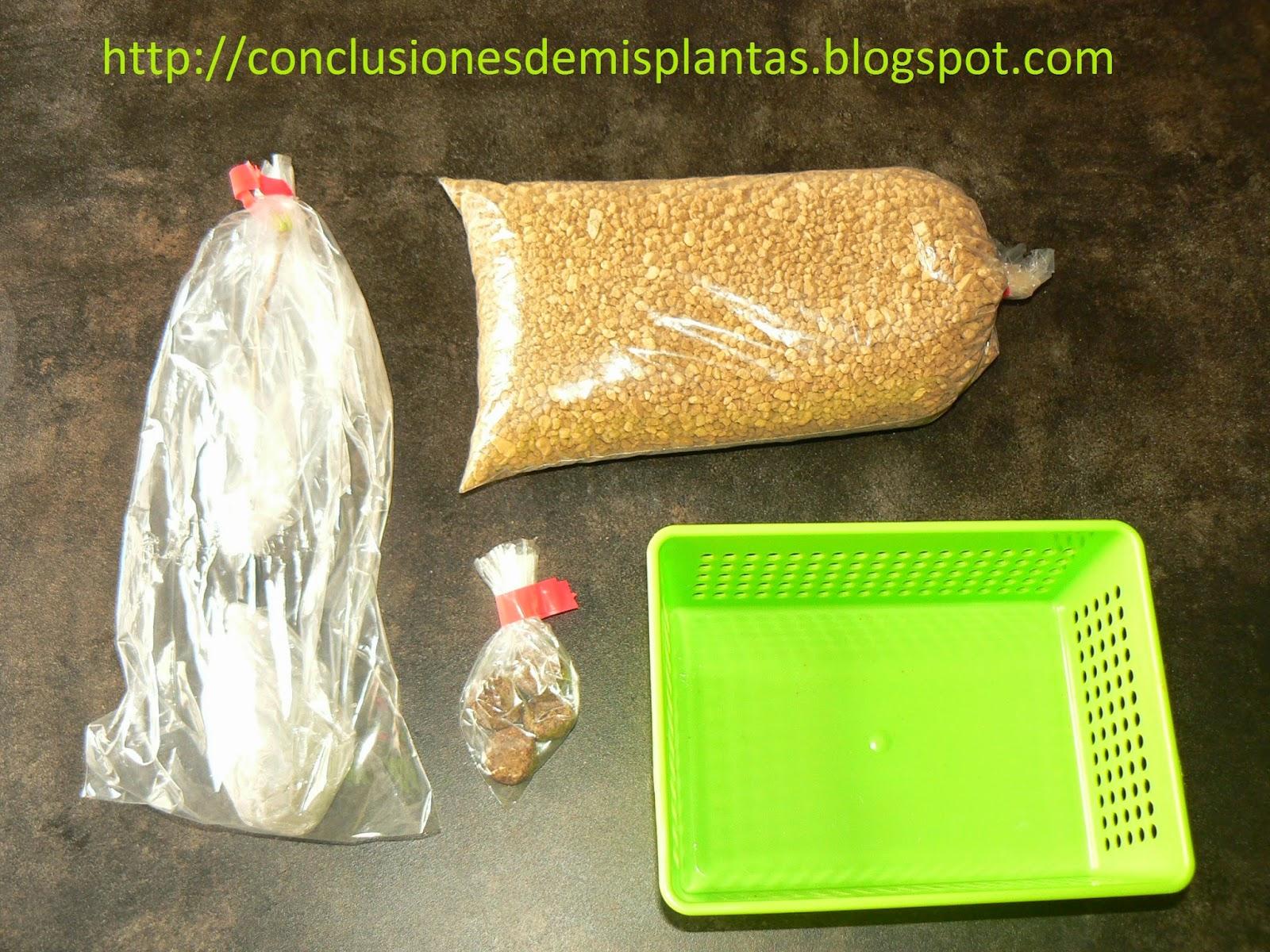 Conclusiones De Mis Plantas Mi Nuevo Kit QuotBonsai Zero Ginkgo Bilobaquot