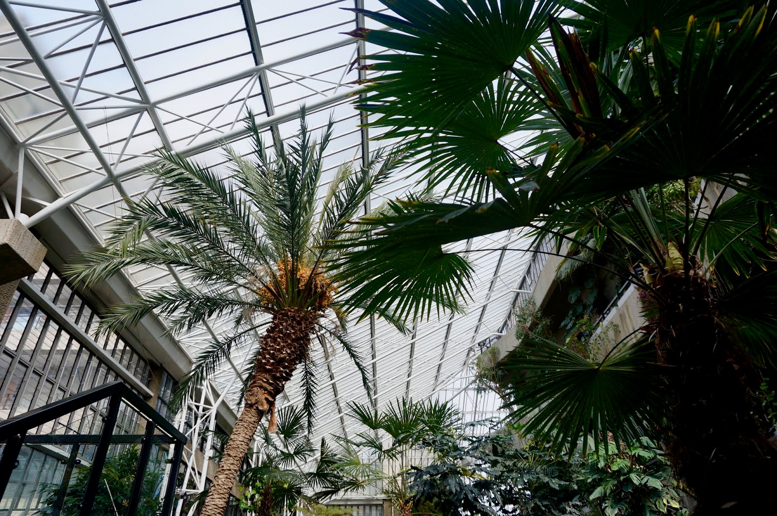 OASIS IN LONDON, BARBICAN CONSERVATORY